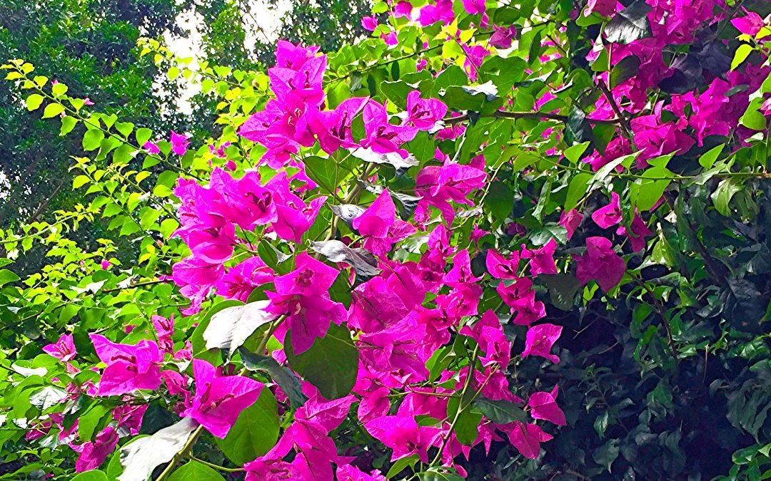 Blooming South Bank