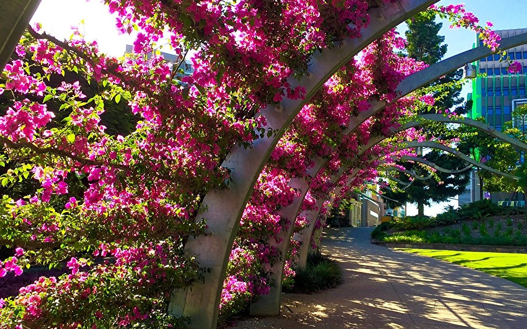 The Grand Arbour