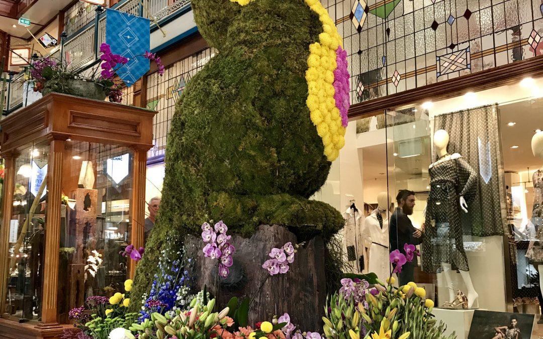Brisbane Arcade 2017 Spring Flower Show