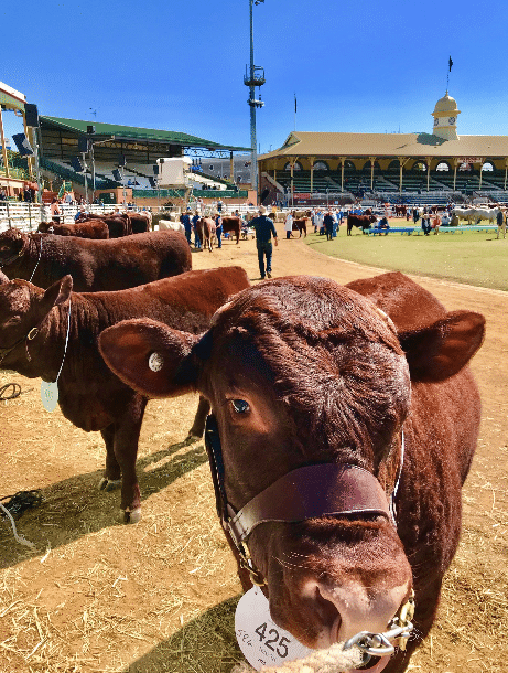 Postcards from Ekka 2018