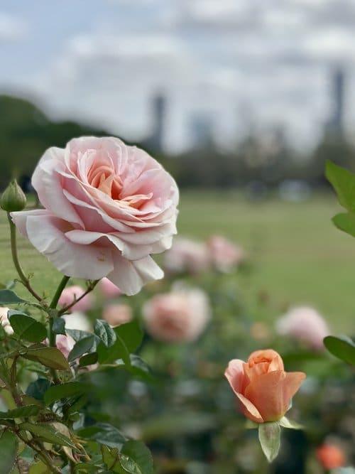 The most Instagrammable spots in Brisbane