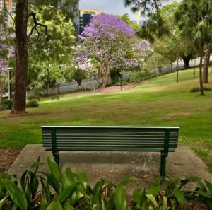 Where to find Jacaranda trees in Brisbane
