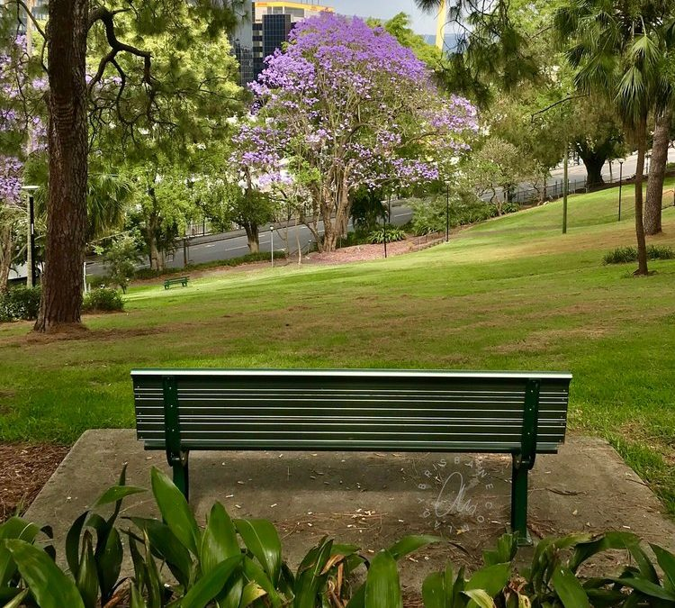 Jacaranda map of Brisbane