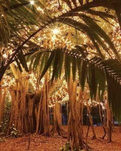 Brisbane Christmas Gift Experiences