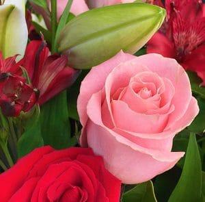 Brisbane Flower Market