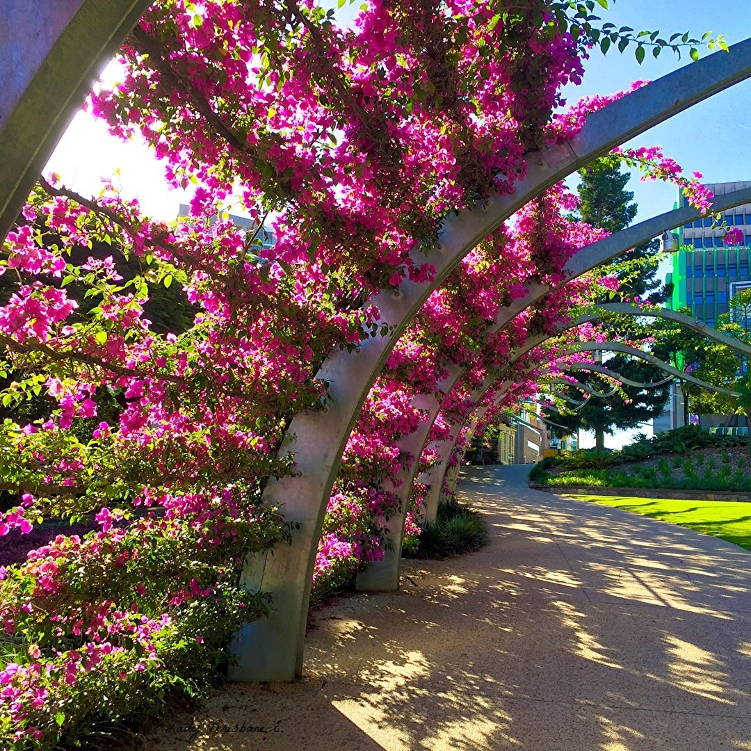 The South Bank Arbour