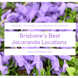Brisbane's best Jacaranda locations