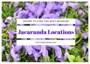 Brisbane Jacaranda locationjs