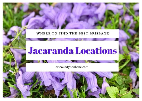 Brisbane Jacaranda locationjs