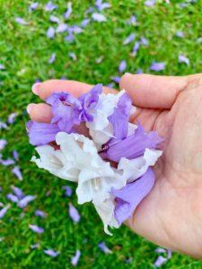 purple and white jacaranda flowers